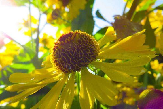 Vitamin D - Symptome und Auswirkungen auf die Psyche