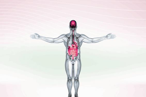 Die Darm-Hirn-Achse